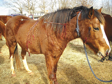 Brooks horse shooter sought2